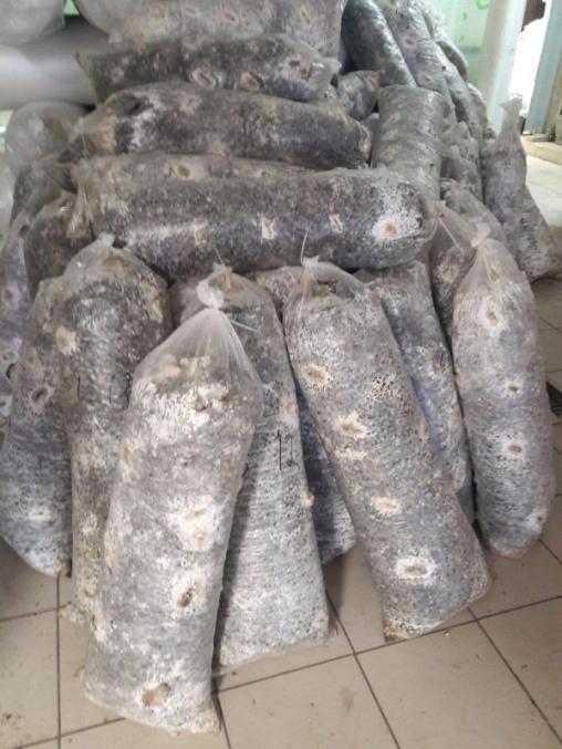 Отработанный грибной блок